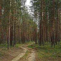 Дорога в сосновом бору... :: Елена Швецова