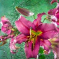 цветок :: Ксения Баркалова