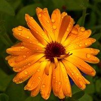 Не смоет краски дождь... :: Galina S*