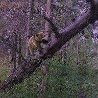 утро в лесу. :: михаил скоморохов