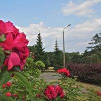 пейзаж с розами :: Елена