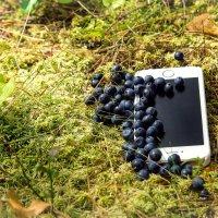 Черничка и iphone :: Александр Ануфриев