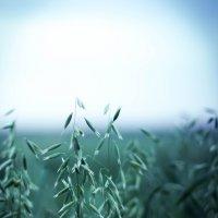 На поле :: Леонид Баландин