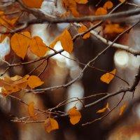 Осеннее настроение :: Oxana Schneider