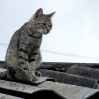 На крыше,принюхивается! Запахи шашлыка привлекли. :: Елизавета Успенская
