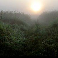Навстречу последнему рассвету уходящего августа...3.. :: Андрей Войцехов