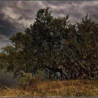 Перед грозой... :: Александр Смольников