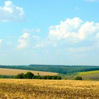 Панорама августа :: Антонина Балабанова