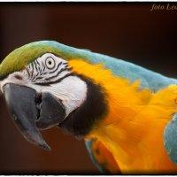Зоопарк в придорожном кафе :: Leo Alex Photographer