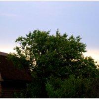 Тихий майский вечер... :: Тамара (st.tamara)