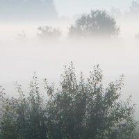 Туман в лугах :: Юрий Цыплятников