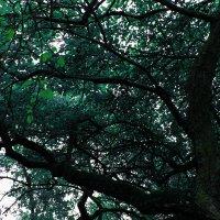 мрачное дерево :: Валерия Ястремская