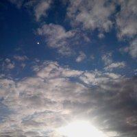 луч солнца золотого :: Светлана Козлова