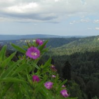 цветы под облаками :: Lilek Pogorelova