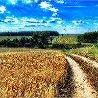 Пшеничные поля :: Андрей Куприянов