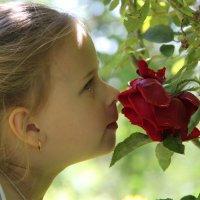 ...И розы аромат... :: Елена Даньшина