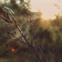 Утро. Солнце. Паутинка. :: Елена Kазак