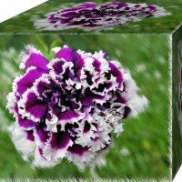 Цветочный кубик. :: Татьяна и Александр Акатов