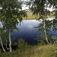 Берёзки на пруду :: Валерий Шибаев