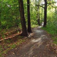 Начало осени в парке IMG_7741 :: Андрей Лукьянов