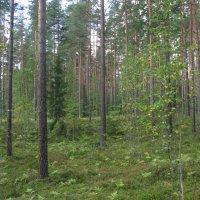 В лес по грибы... :: ТАТЬЯНА (tatik)