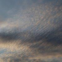Перистые облака :: Ирина Beatrisa