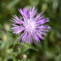 Цветок :: Наталия Макарычева