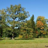 Осень наступила... :: Наталия Короткова