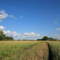 Летняя дорога, или - когда травы были большими :: Юрий Морозов