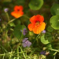 осенние цветы :: ирина Лепейко