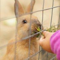 кролики :: ирина Лепейко
