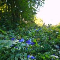цветы :: Юлия Чорнявская