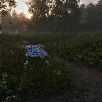 В тумане :: Ольга Литвинцева