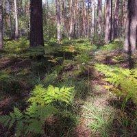 Лесные прогулки :: Ната Волга