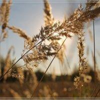 ..на фоне солнца... :: Александр Герасенков