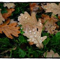И всё таки осень... :: muh5257