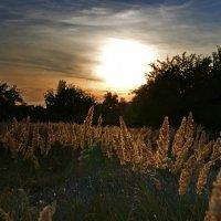 Последние летние зарисови природы :: Татьяна Кретова