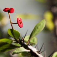 Домашний цветок)) :: Лазарева Оксана