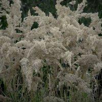 шёпот  травы :: Дмитрий Потапов