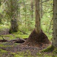 лес :: Roman Demidov