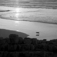 Одиночество :: Светлана marokkanka