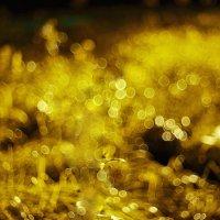 Блики травы :: Артур Миханев