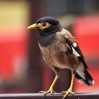 Angry bird :: Аркадий Чумаков