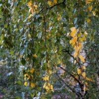 Осень :: Елена Федотова