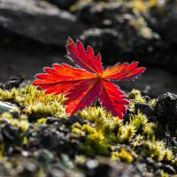 Осенние краски :: Денис Антонов