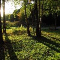 Релаксация после работы IMG_8180 :: Андрей Лукьянов