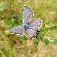 Голубая :: Эдуард Цветков