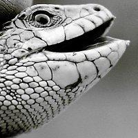 Рептилия...улыбка :: Allekos Rostov-on-Don