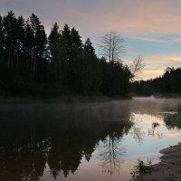 Восход в лесу :: Александр Бакаев