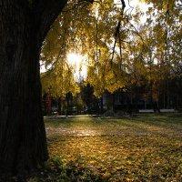 Осенний пейзаж :: Aioneza (Алена) Московская